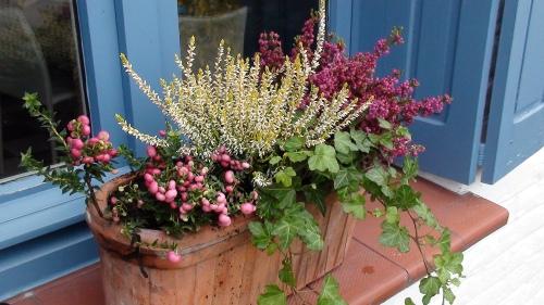 jardinière automne gaulthéria lierre bruyères Crédit Céline Delhaye
