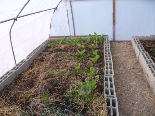 serre-tunnel pour des légumes toute l'année même en hiver.