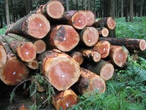 Très belle photo de tronc d'arbre. Crédit DR
